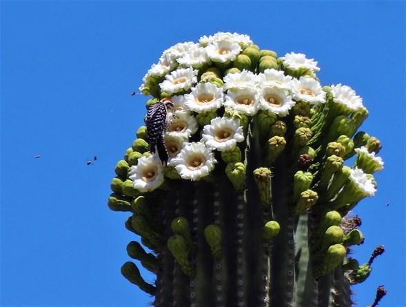 Saguaro 2016